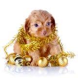 Perrito con las bolas y la malla del Año Nuevo. Fotografía de archivo