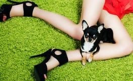 Perrito con las patas que abrazan sobre los pies de la mujer Fotos de archivo