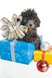 Perrito con los regalos del Año Nuevo Foto de archivo