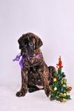 Perrito con un árbol de navidad Imagenes de archivo