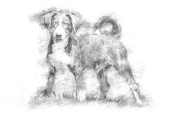 Perrito de Appenzeller - estilo del bosquejo Fotos de archivo libres de regalías