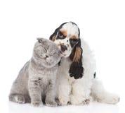 Perrito de cocker spaniel que lame el gatito joven Aislado en blanco Fotos de archivo