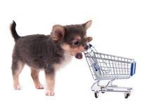 Perrito de la chihuahua y carro de compras Foto de archivo libre de regalías