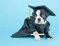 Perrito de la graduación Fotos de archivo libres de regalías