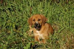 Perrito de la mezcla del perro Imágenes de archivo libres de regalías
