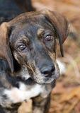 Perrito de la mezcla del perro Imagenes de archivo
