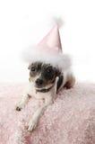 Perrito de la muchacha del cumpleaños Foto de archivo libre de regalías