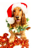 Perrito de la Navidad Fotos de archivo libres de regalías