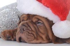 Perrito de la Navidad Imagen de archivo