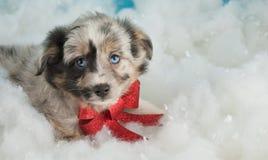 Perrito de la Navidad fotografía de archivo