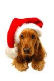 Perrito de la Navidad con el sombrero de Santa Foto de archivo