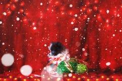 Perrito de la Navidad con nieve que cae imagen de archivo libre de regalías