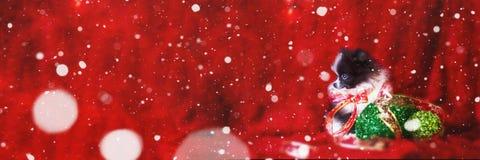 Perrito de la Navidad con nieve que cae bandera fotos de archivo libres de regalías