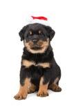 Perrito de la Navidad de Rottweiler Foto de archivo