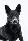 Perrito de la nieve imagenes de archivo
