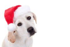 Perrito de Navidad con el espacio de la copia Fotografía de archivo libre de regalías