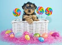 Perrito de Pascua Fotografía de archivo libre de regalías