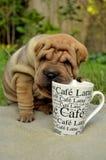 Perrito de Sharpei con la taza de café Foto de archivo