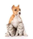 Perrito de Stafford y dos gatitos escoceses que se sientan junto Aislado Imagen de archivo libre de regalías