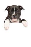 Perrito de Staffordshire bull terrier sobre bandera Fotografía de archivo