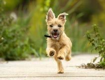 Perrito de Terrier de mojón imagen de archivo libre de regalías