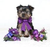 Perrito de Yorkie de la Navidad. imágenes de archivo libres de regalías