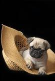 Perrito del barro amasado en un sombrero Imagen de archivo libre de regalías