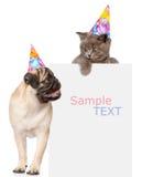 Perrito del barro amasado y pequeño gatito en sombreros del cumpleaños sobre la bandera blanca Espacio para el texto Aislado en b Foto de archivo