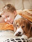 Perrito del beagle que miente en cama con el muchacho fotografía de archivo libre de regalías