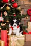 Perrito del border collie en el fondo blanco de las decoraciones de la Navidad imagenes de archivo