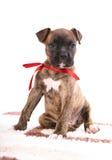 Perrito del boxeador que se sienta en la alfombra Imagen de archivo