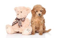 Perrito del caniche con el juguete en el fondo blanco Fotos de archivo