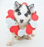 Perrito del día de tarjeta del día de San Valentín Imagen de archivo libre de regalías