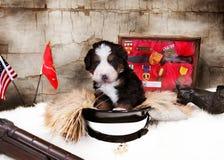 Perrito del día de veteranos Fotografía de archivo libre de regalías