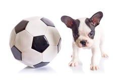 Perrito del dogo francés con el balón de fútbol Imágenes de archivo libres de regalías