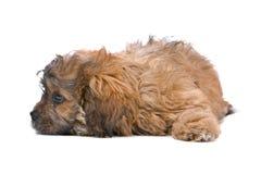 Perrito del nacido en el baby-boom Foto de archivo libre de regalías