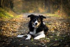 Perrito del otoño fotografía de archivo libre de regalías