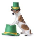 Perrito del partido del día de St Patrick Imágenes de archivo libres de regalías