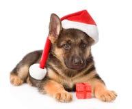 Perrito del pastor alemán con la caja roja del sombrero y de regalo Aislado en blanco Fotos de archivo