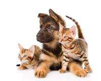 Perrito del pastor alemán y dos gatitos de Bengala que miran lejos isola Imagen de archivo