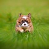 Perrito del perro Fotografía de archivo