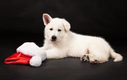 Perrito del perro pastor blanco con un casquillo del Año Nuevo Imagen de archivo
