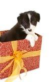 Perrito del regalo de Navidad Imágenes de archivo libres de regalías