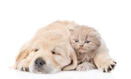 Perrito del sueño que abraza un gatito lindo Aislado en el fondo blanco imágenes de archivo libres de regalías