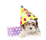 Perrito del terrier de Biewer-Yorkshire con el sombrero del cumpleaños y la caja de regalo Aislado en blanco Fotografía de archivo libre de regalías