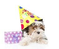 Perrito del terrier de Biewer-Yorkshire con el sombrero del cumpleaños y la caja de regalo Aislado en blanco Imágenes de archivo libres de regalías