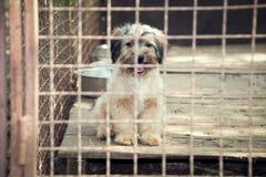Perrito detrás de la cerca Fotos de archivo