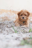 Perrito divertido en la arena Fotos de archivo