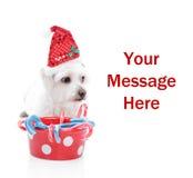 Perrito dulce de la Navidad Fotografía de archivo libre de regalías