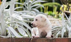 Perrito dulce en el jardín Fotos de archivo